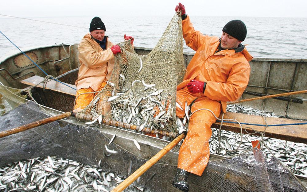 рыболовные артели вакансии